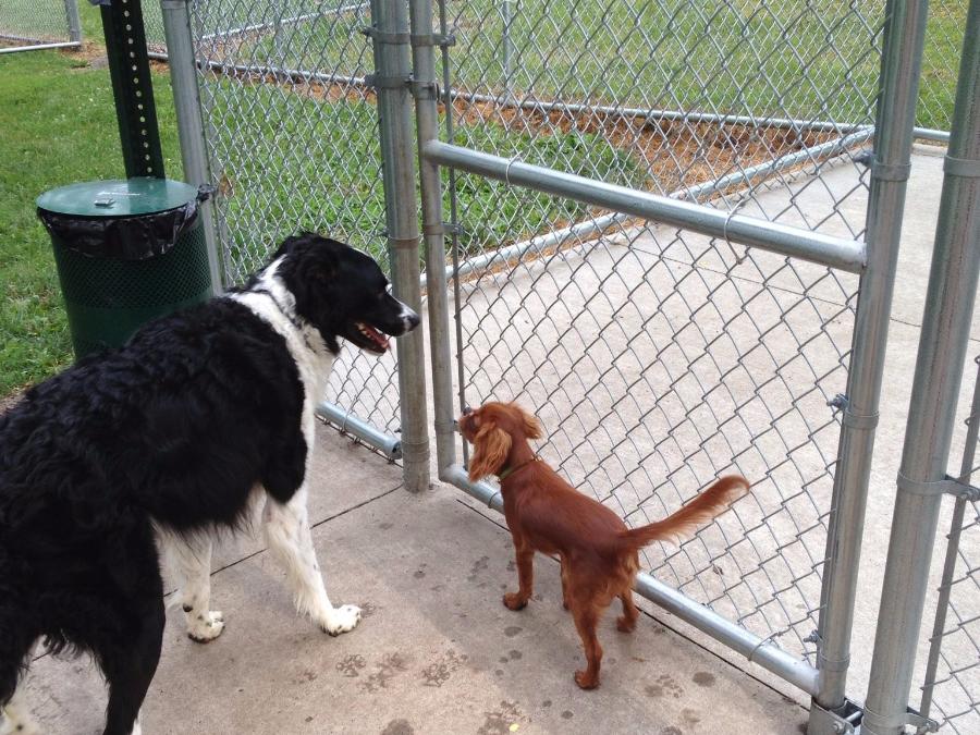 Newton Dog Park Iowa