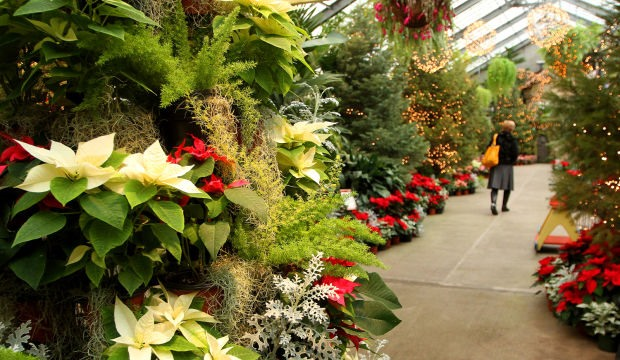 Holiday floral display at the Conservatory