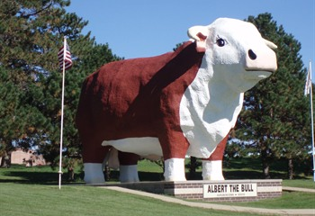 Albert - The World's Largest Bull