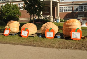 The Big Pumpkin Competition